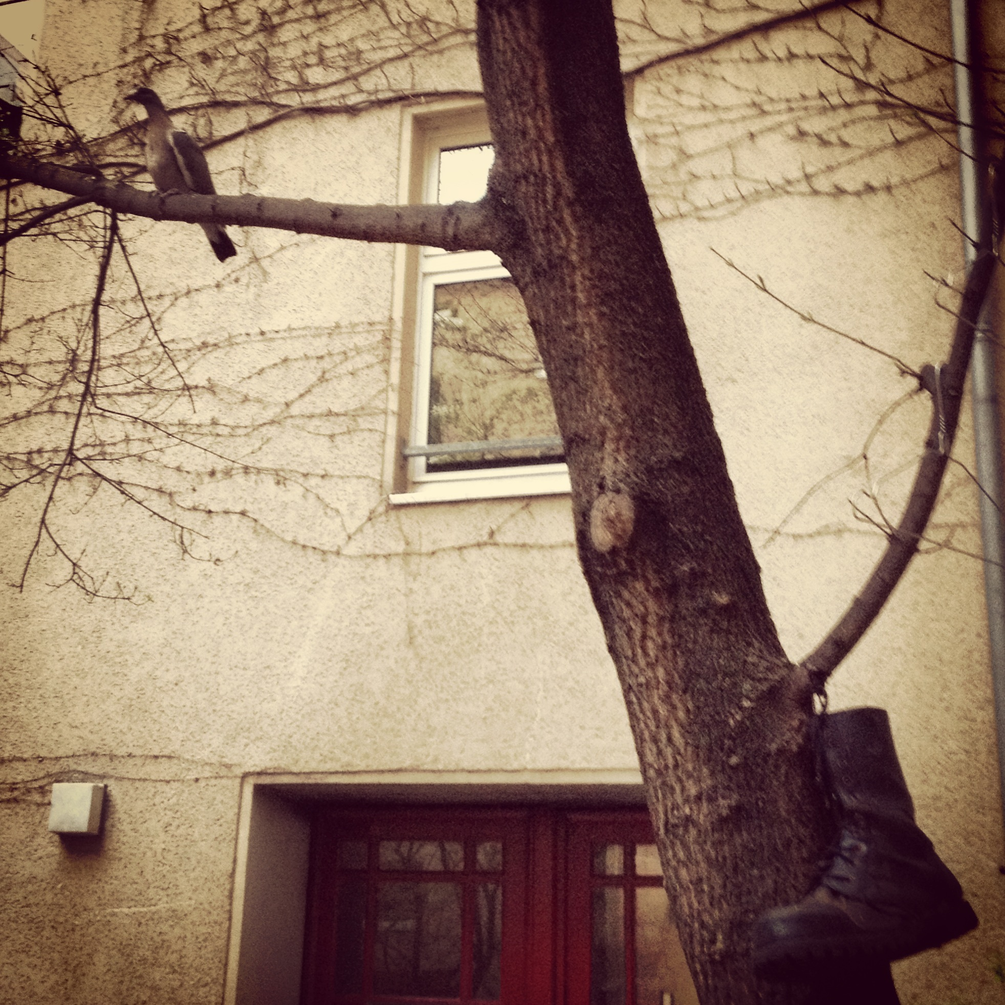 10-berlin-pigeon-and-boot-in-a-tree.JPG