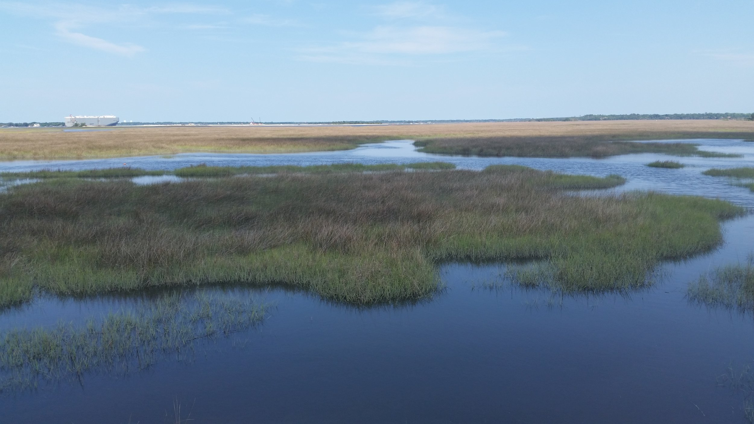 I love the flow of water and marsh grasses in Jacksonville's coastal wetland areas. I can't wait to paint some of these!