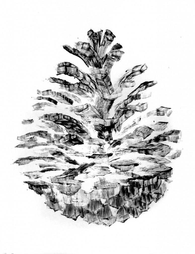 Pine-Cone-Architecture-250-785x1024.jpeg