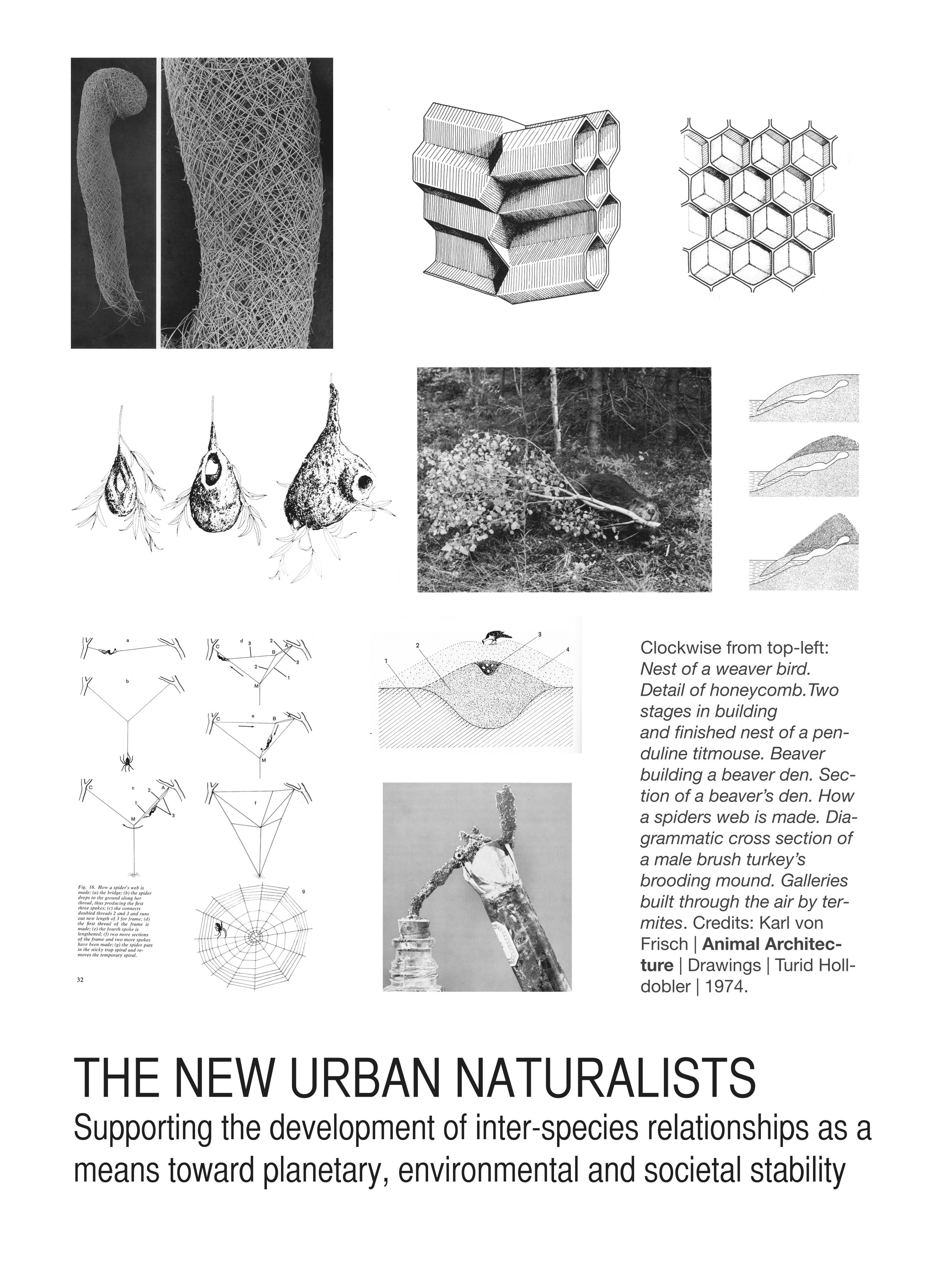 The New Urban Naturalists, 2013. Promotional poster. 18x24 inches.