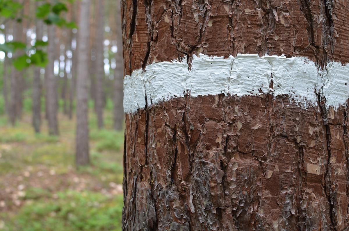 trail_marker.jpg