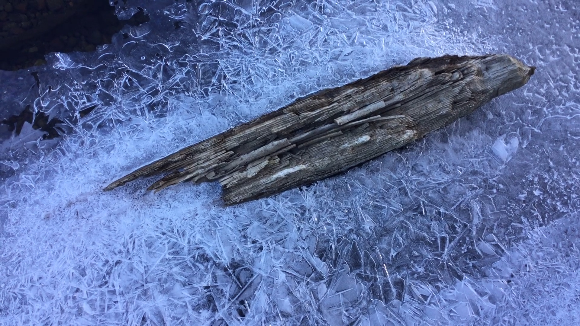 Frozen water and wood, in Sage Hen Creek. The complexity in the patterns, nearly overlooked, is astounding and beautiful.