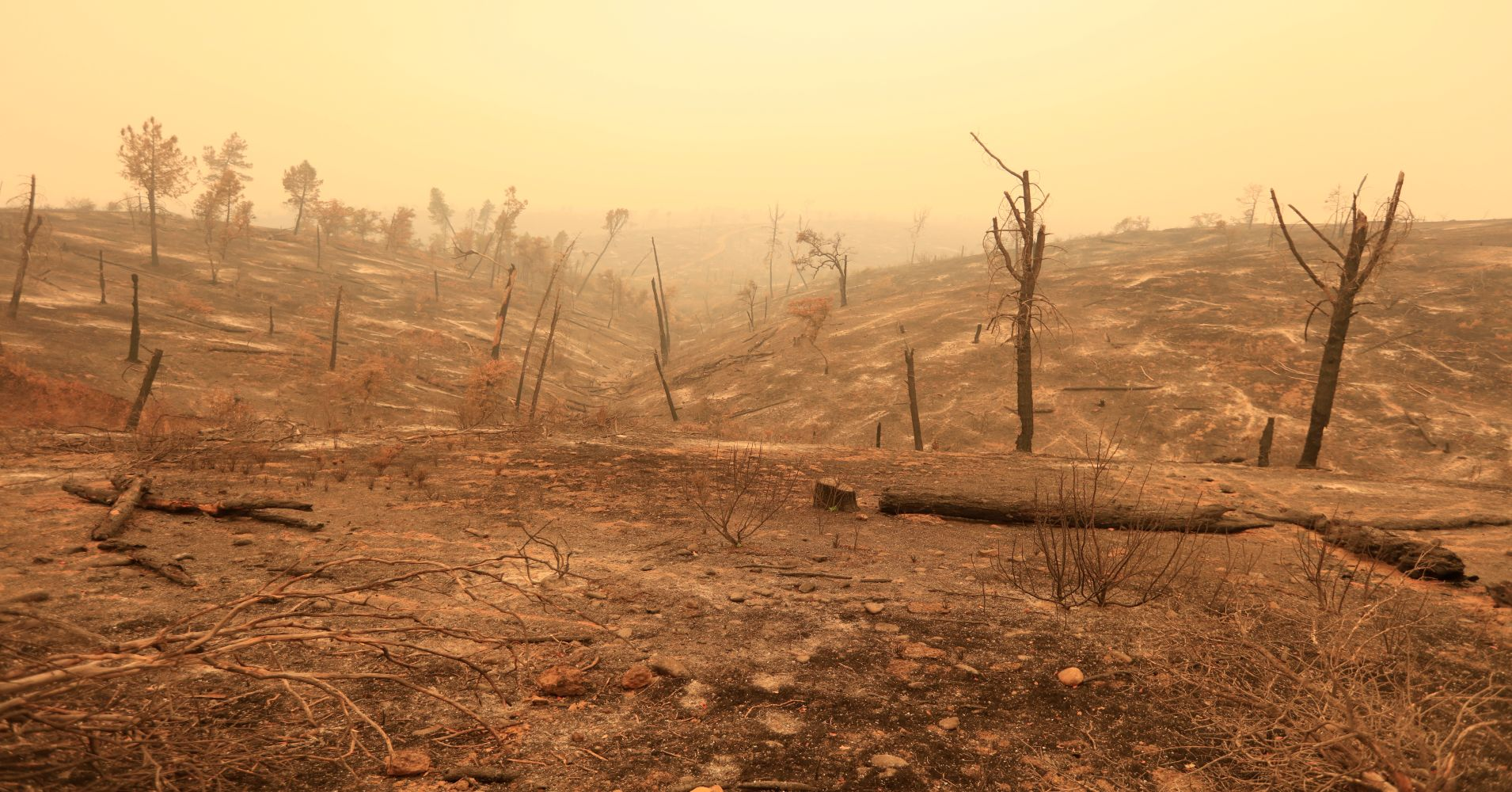 Carr Fire, Redding California, 2018. Image Bob Strong Reuters