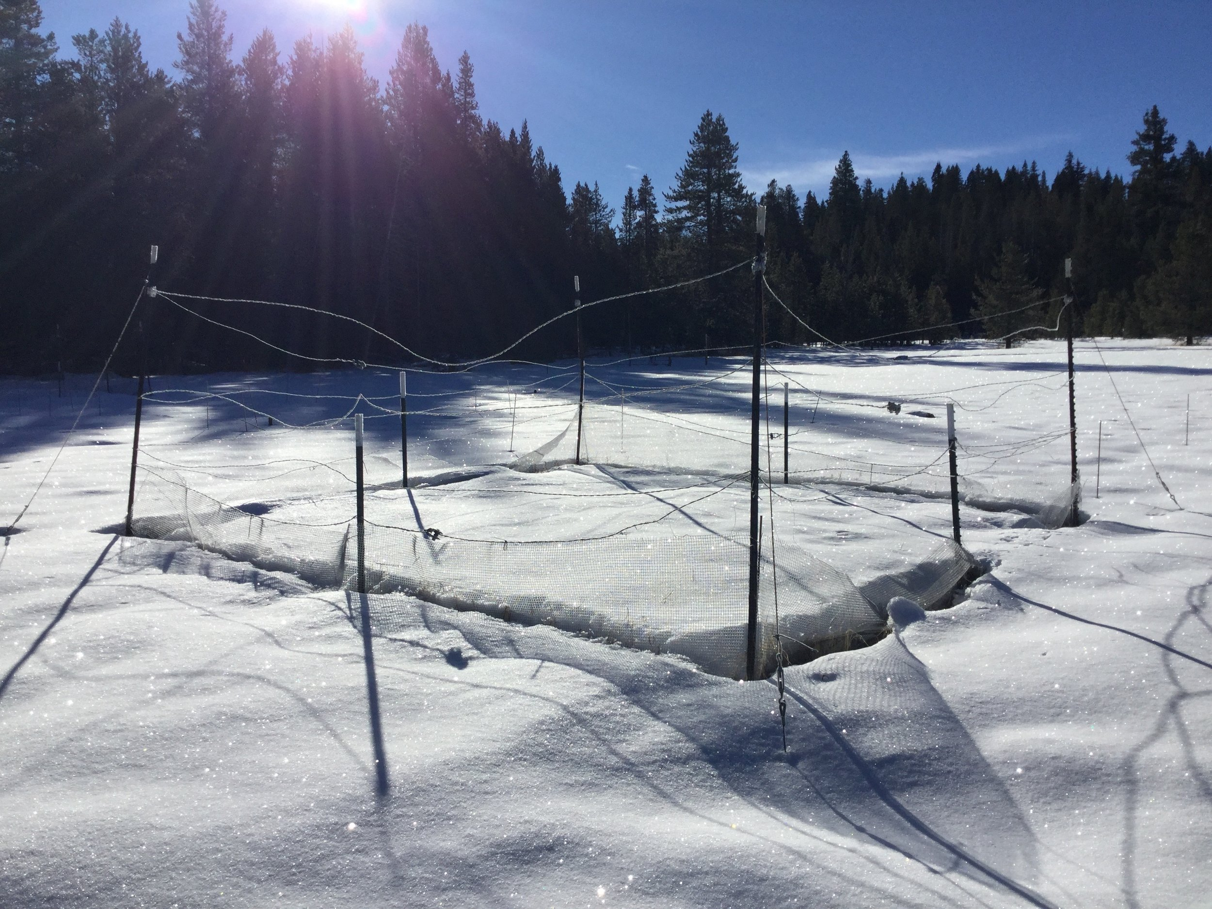 Data collection sight, Sage Hen Field Station, 2019