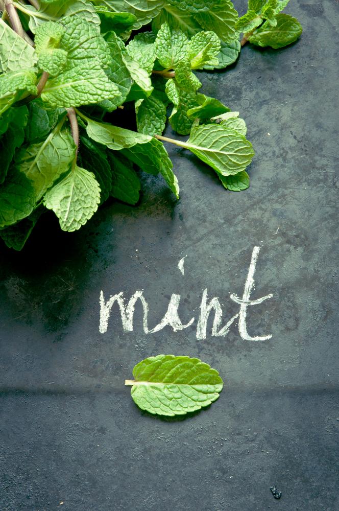 Fresh Mint for a Mojito