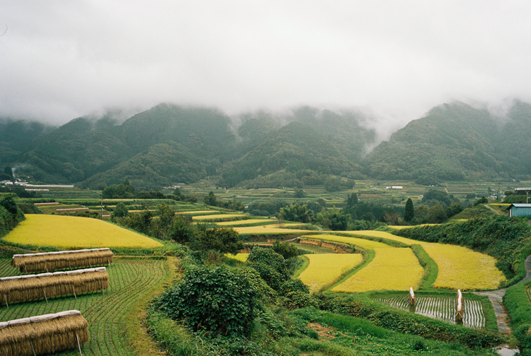 Rice fields, from the main road