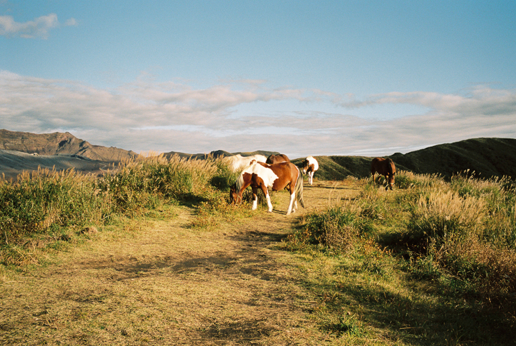 More horses, Aso