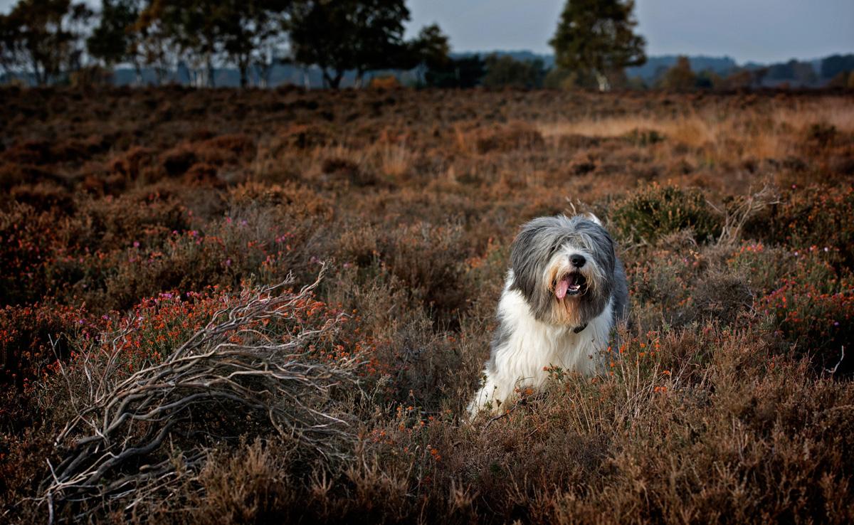 Westleton-heath-Mojo-Jesse257.jpg