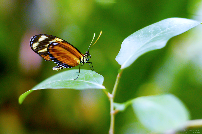 butterflyFLFW.jpg