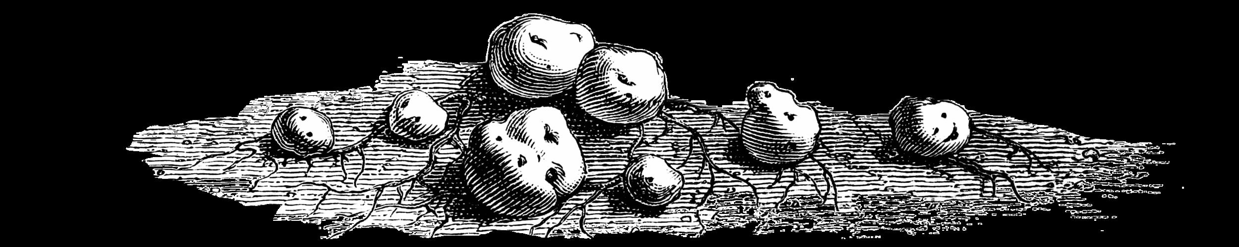 potatoes2.png