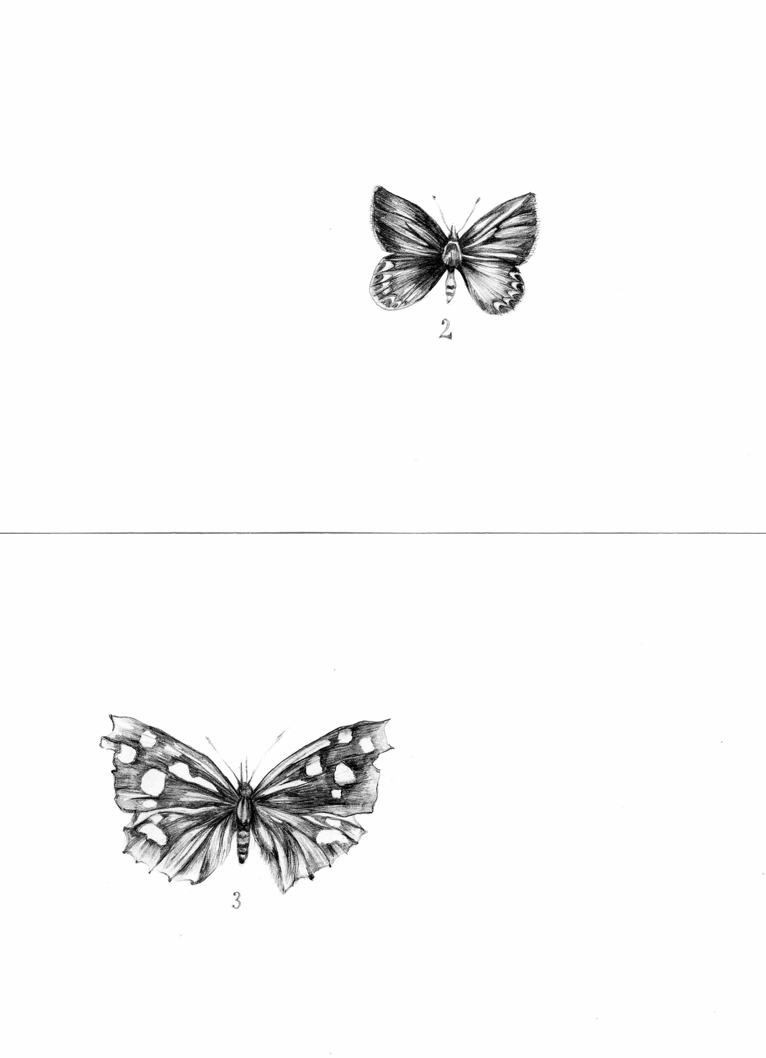 1. butterflies.jpg
