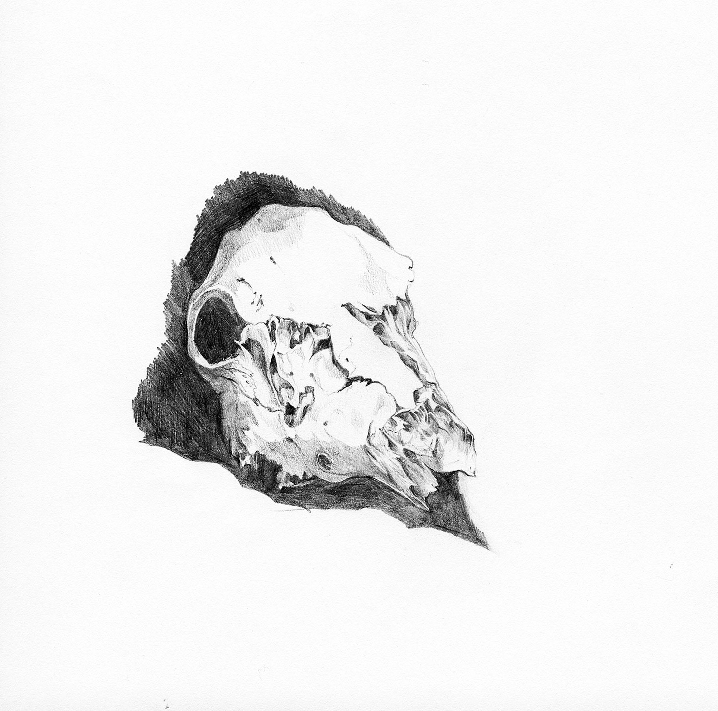 4. skull2.jpg