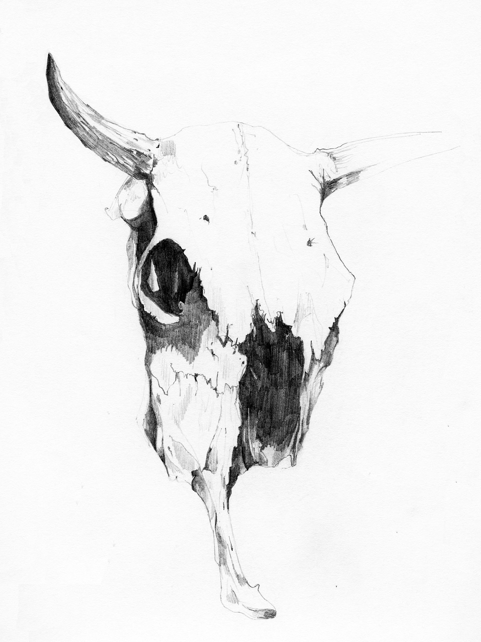 3. skull1.jpg