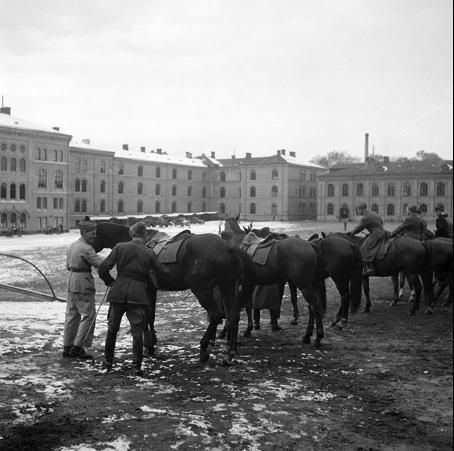 Remonter, dvs unghästar vid Svea artilleriregemente, Valhallavägen, under beredskapsåren 1942.