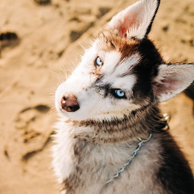 Animals -