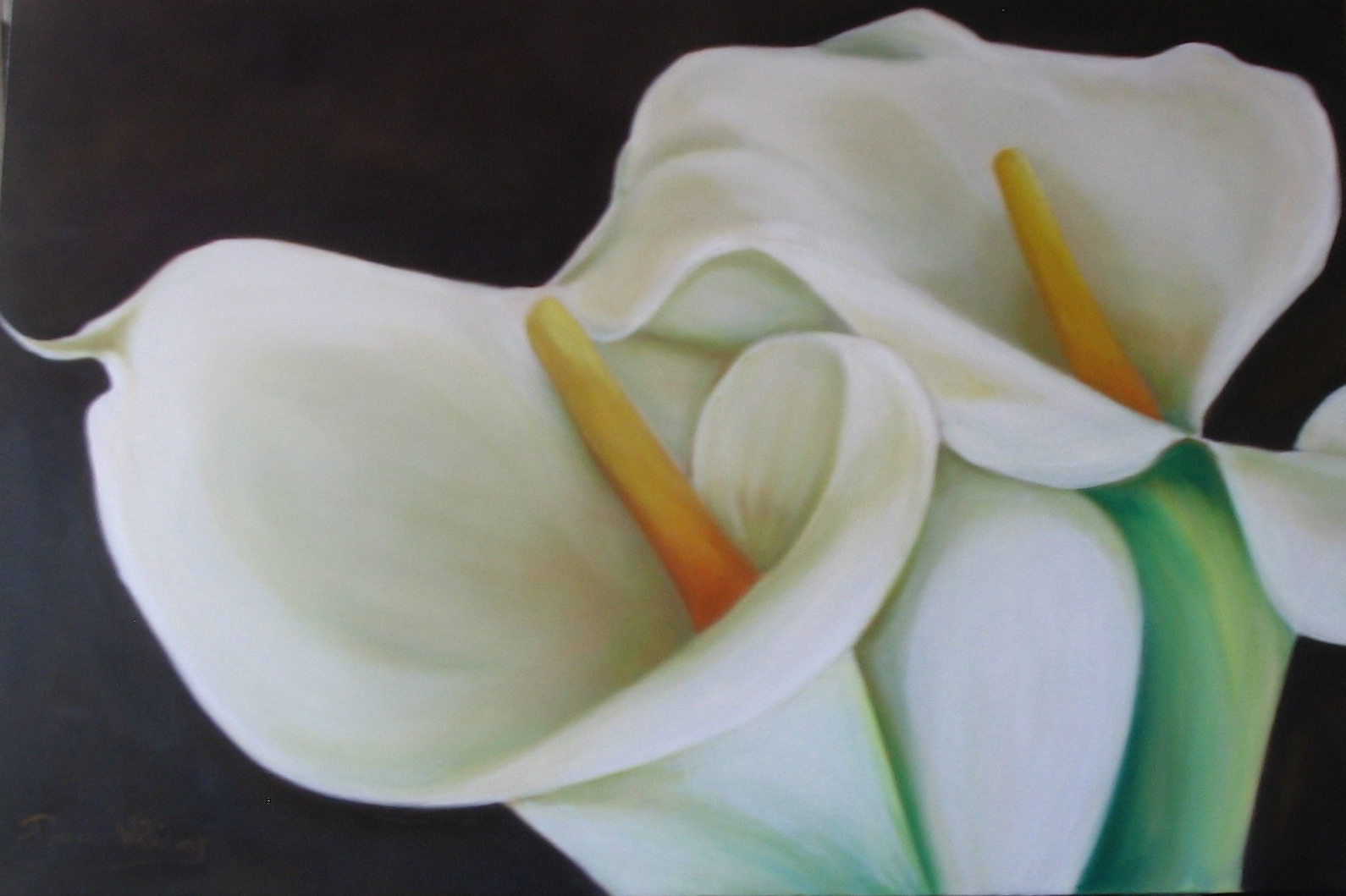 efflorescence callae white (1).jpg