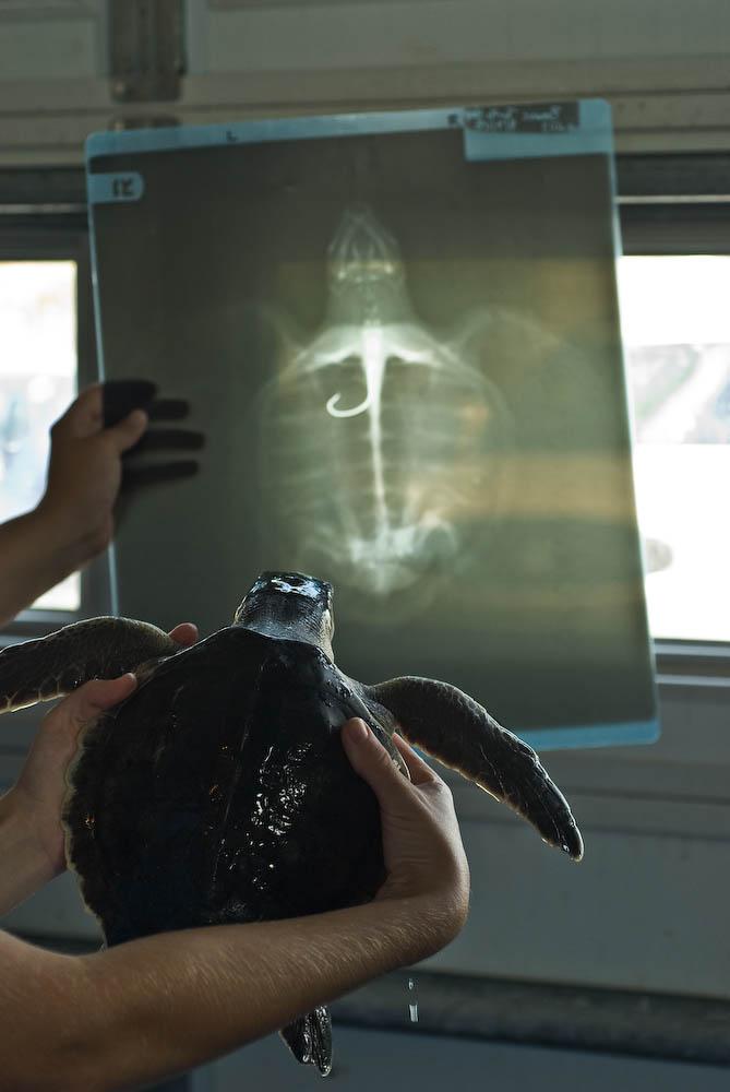 Sea Turtle Project