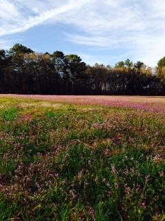 Clover Field, Georgia, Deep South