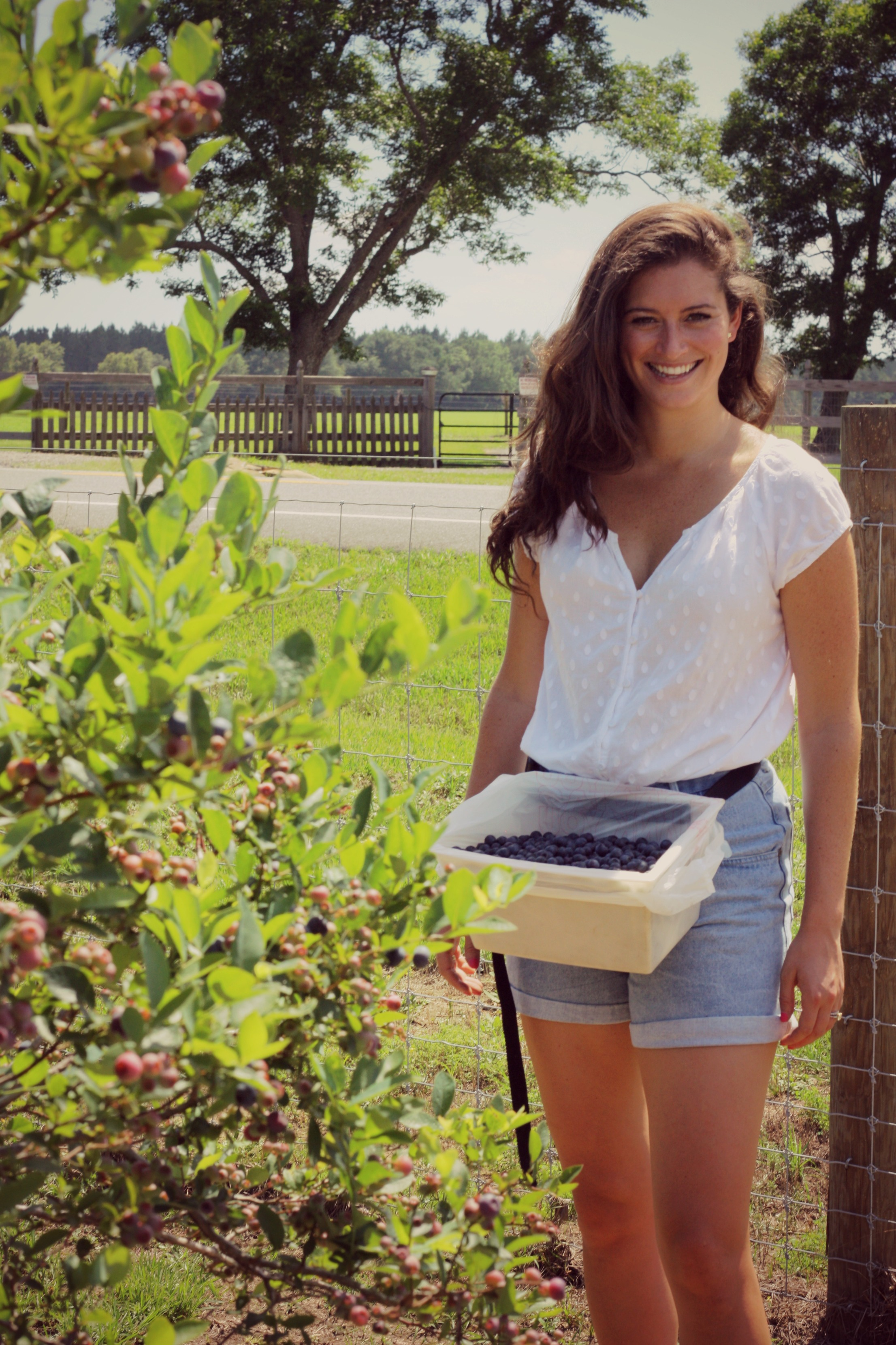 The Gallivant: Blueberry Picking