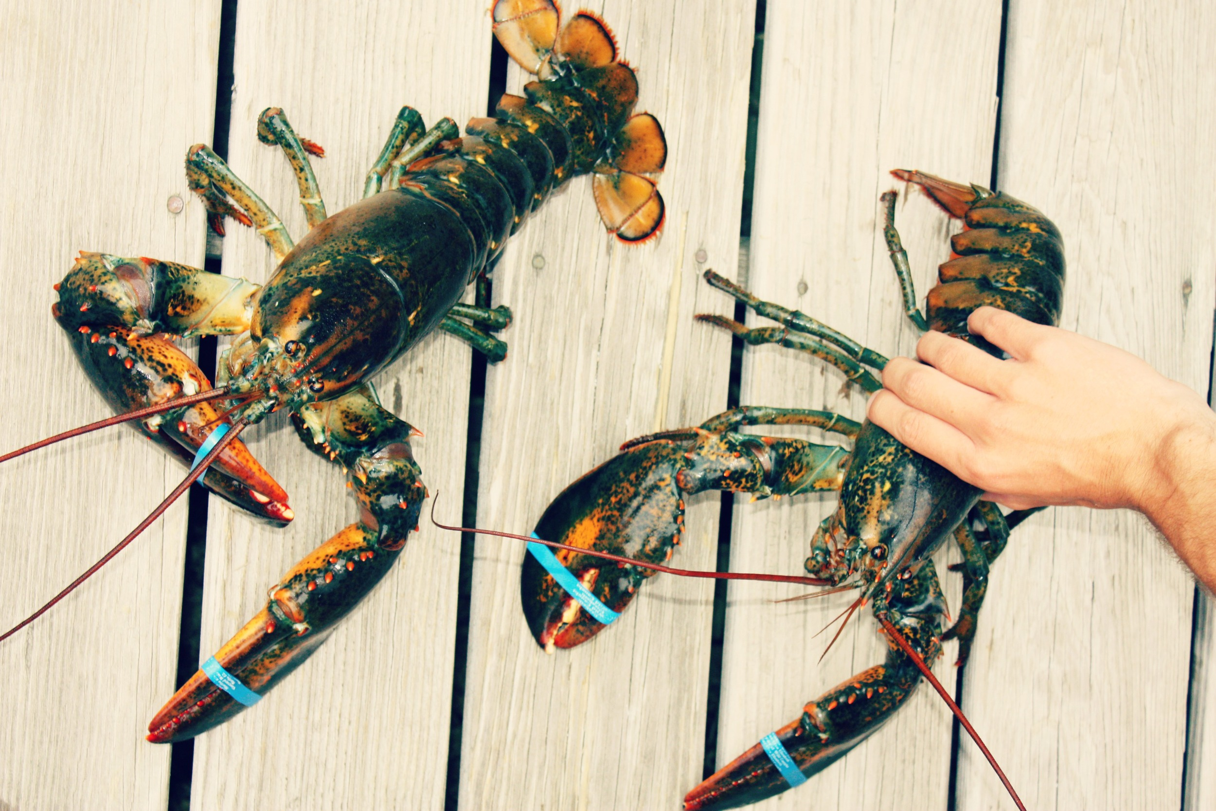 Lobster.jpg.jpg