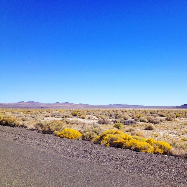 Desert, American West, Nevada.jpg
