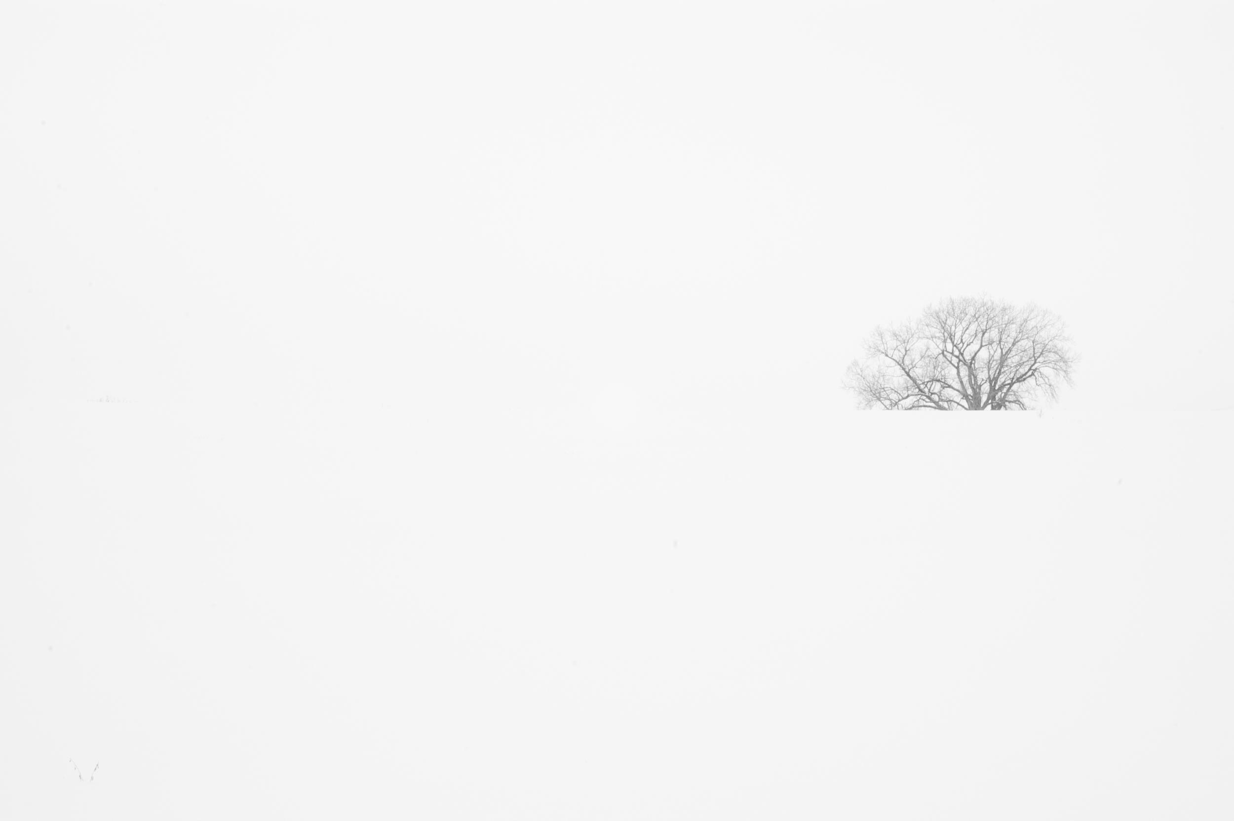Tree in a Snow Field. Bethel Horizons.Dodgeville, Wisconsin. February 2010. © William D. Walker.