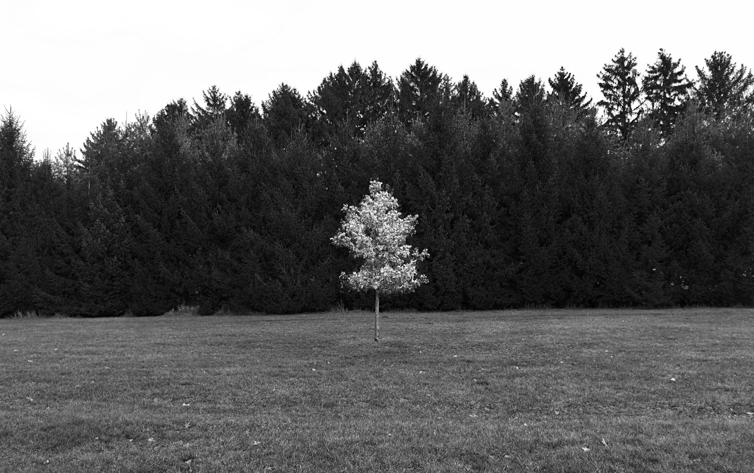Tree B/W. Lussier Center. Madison, Wisconsin. December 2016. © William D. Walker