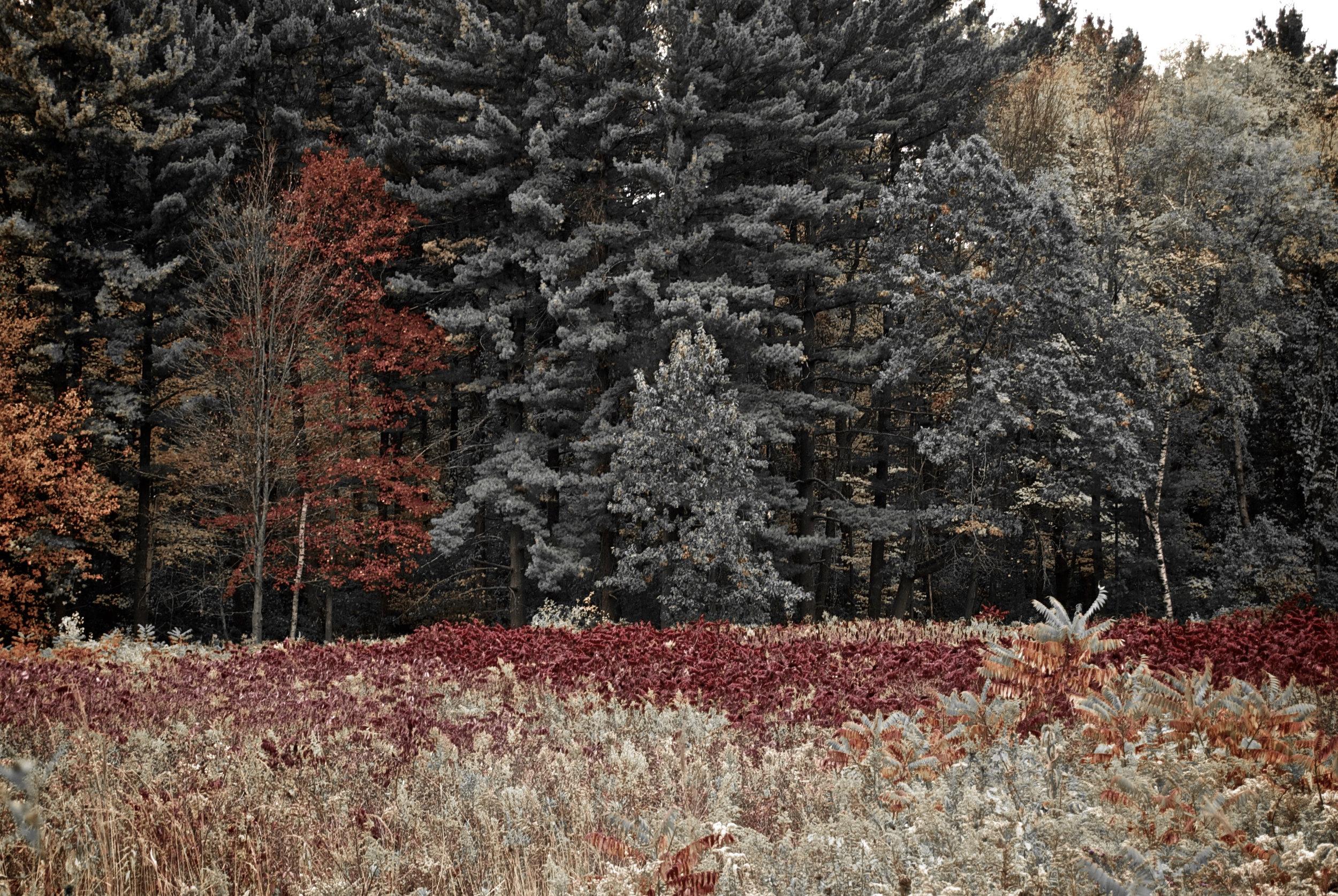 Fall. Arboretum. Madison, Wisconsin. October 2012. © William D. Walker