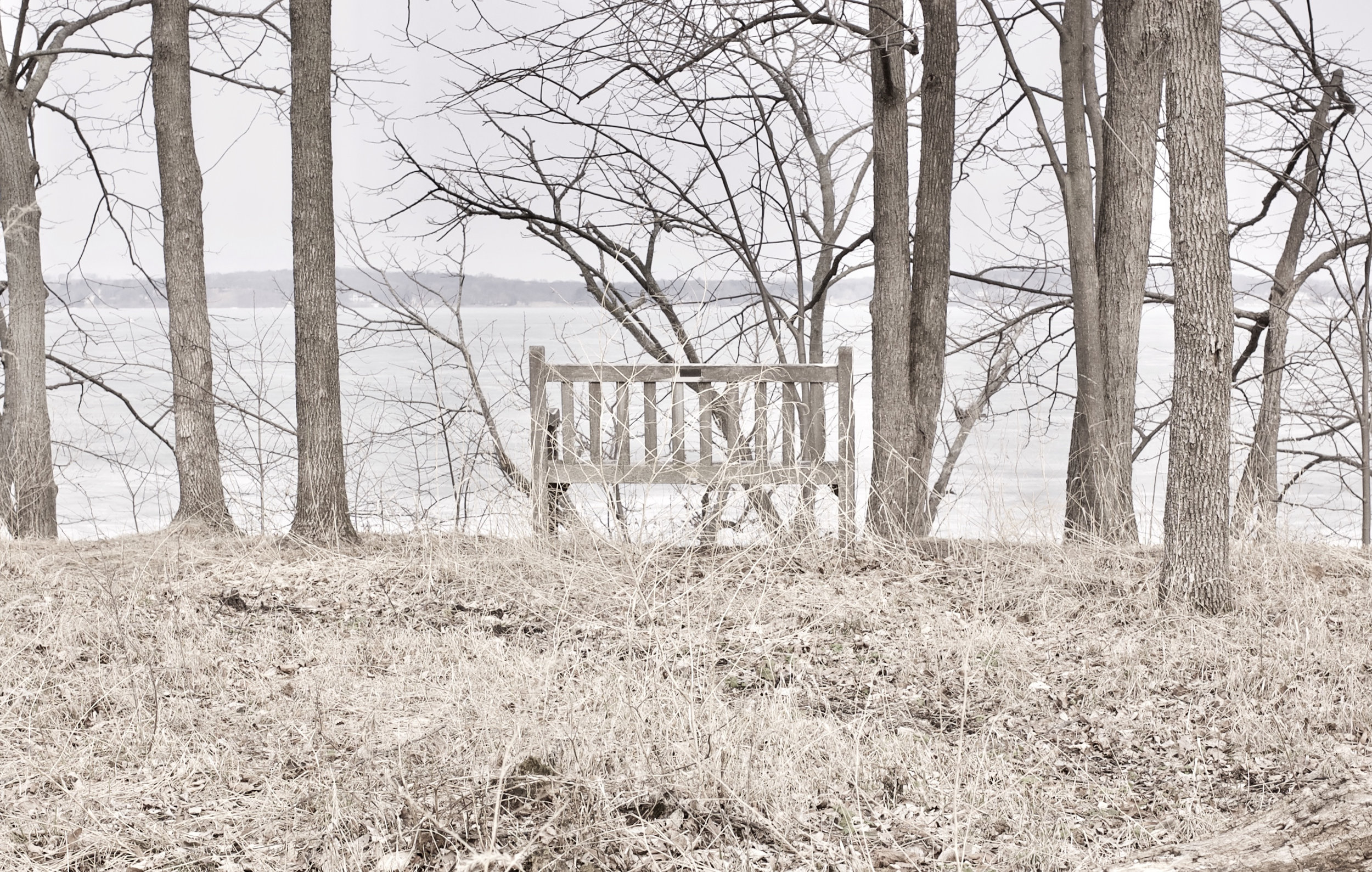 Among the Living. Picnic Point. Madison, Wisconsin. April 2014. © William D. Walker