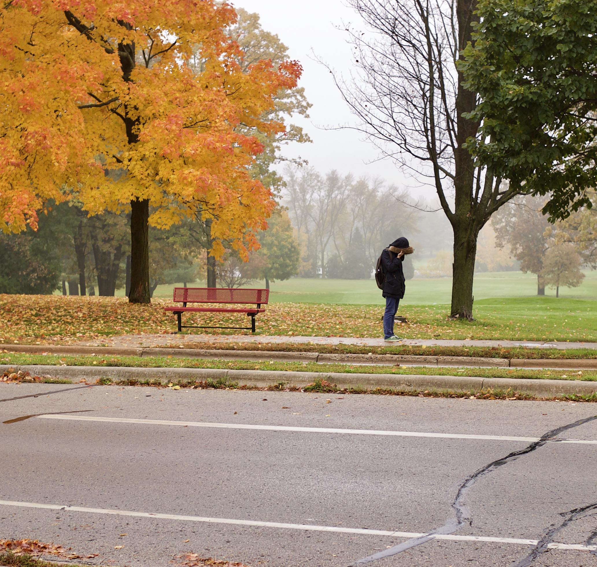 Wet Bus Stop. Odana Road. Madison, Wisconsin. October 2014. © William D. Walker