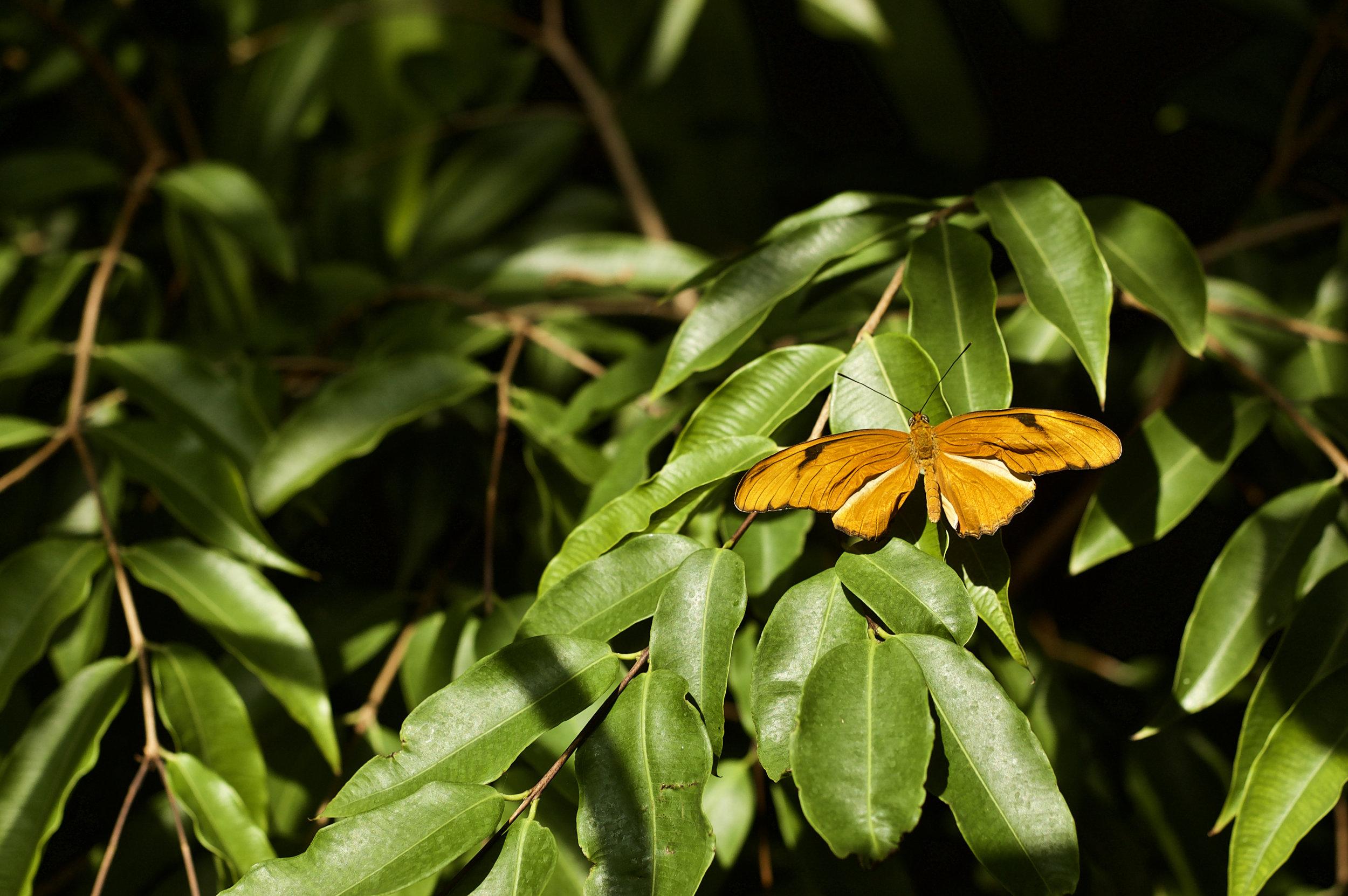 Orange Wing. Botz Conservatory, Olbrich Gardens. Madison, Wisconsin. August 2010. © William D. Walker
