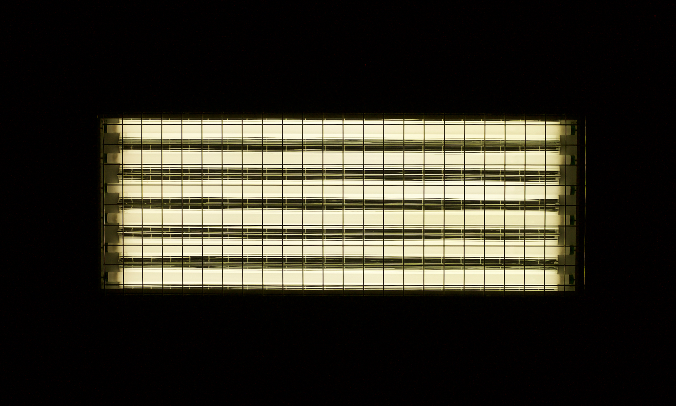 Fluorescent Rack. ALCS. Madison, Wisconsin. January 2014. © William D. Walker