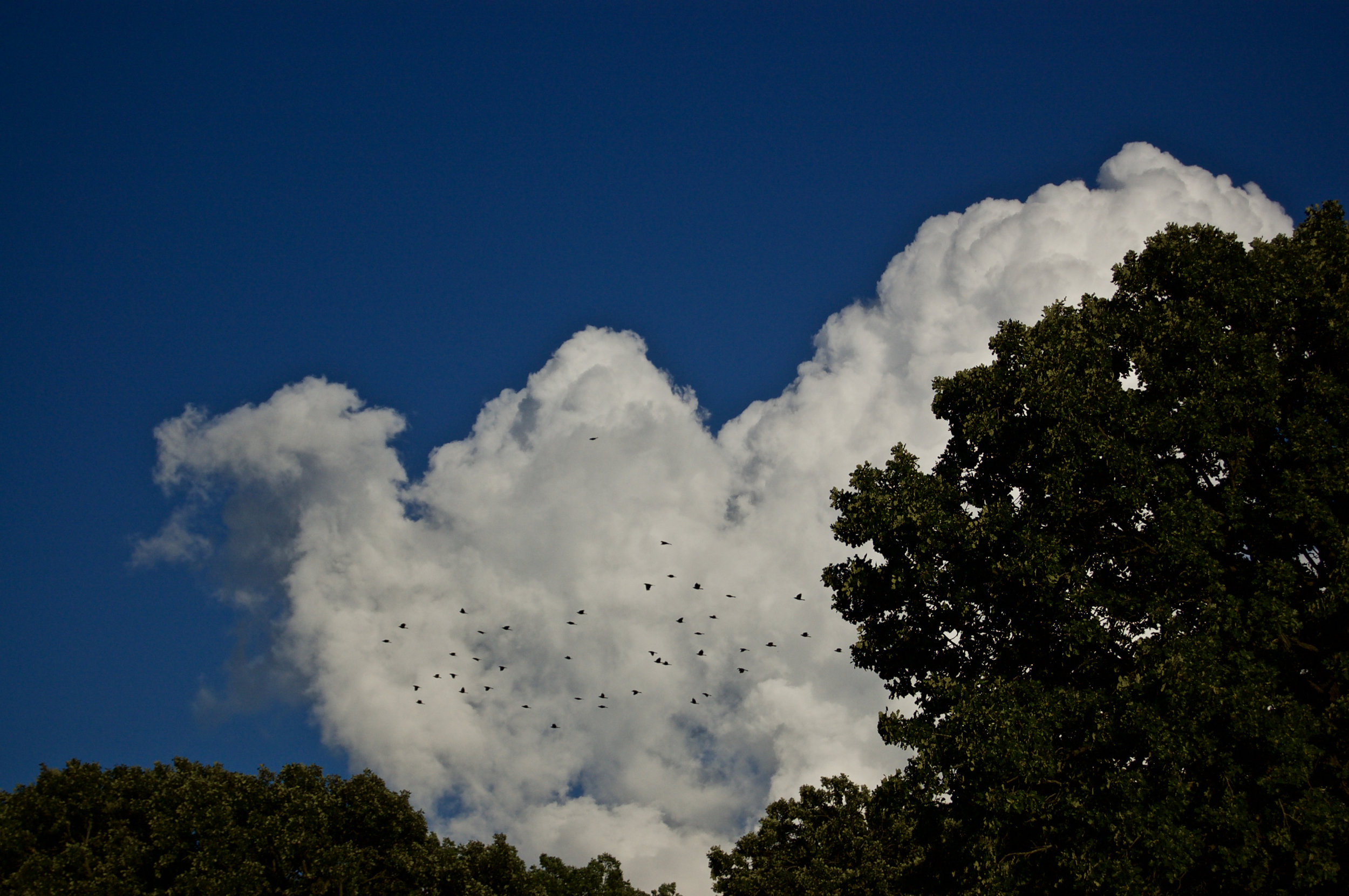 Cloud and Flock. Madison, Wisconsin. August 2008. © William D. Walker