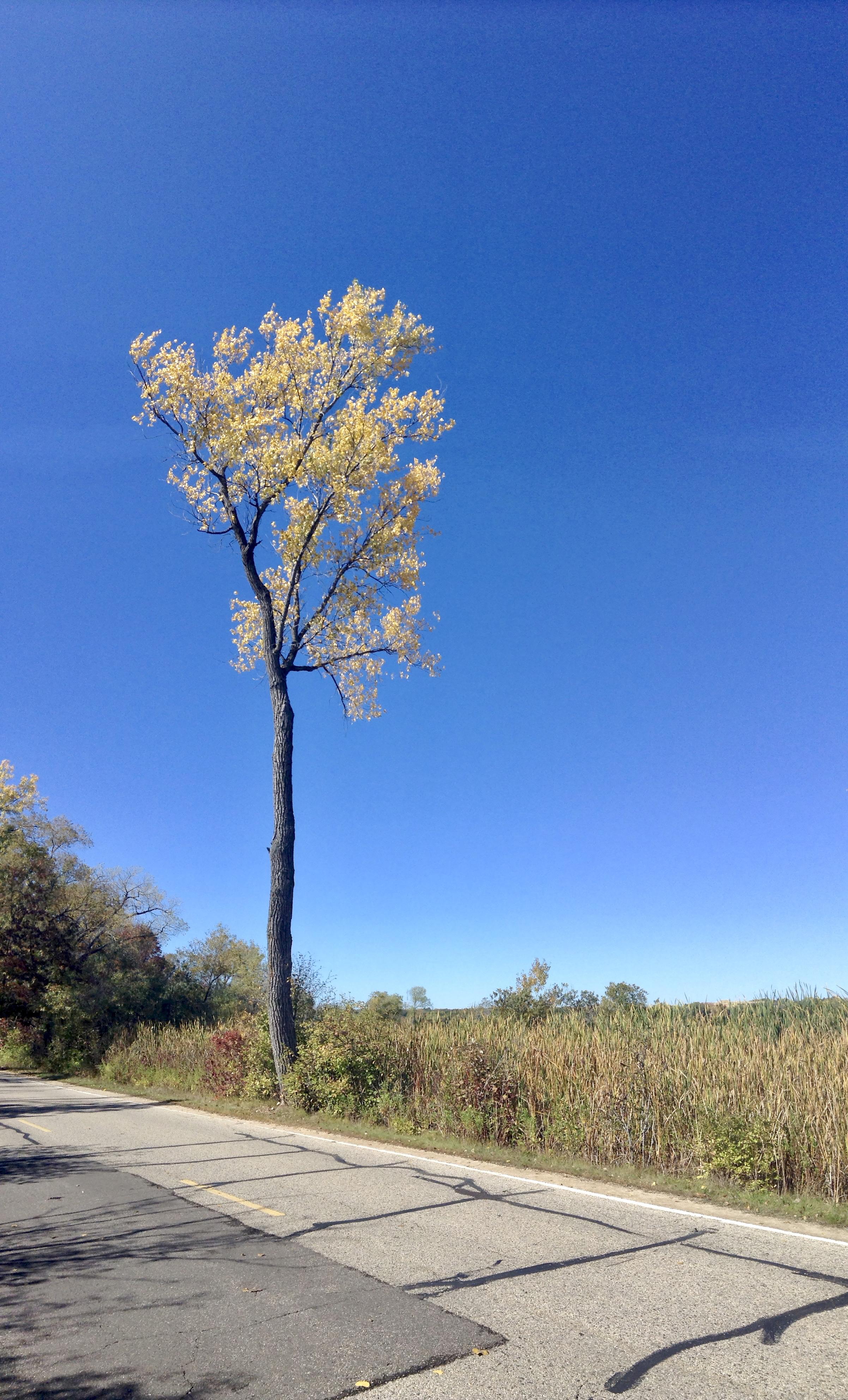 Trunk. UW Arboretum. Madison, Wisconsin. October 2013. © William D. Walker