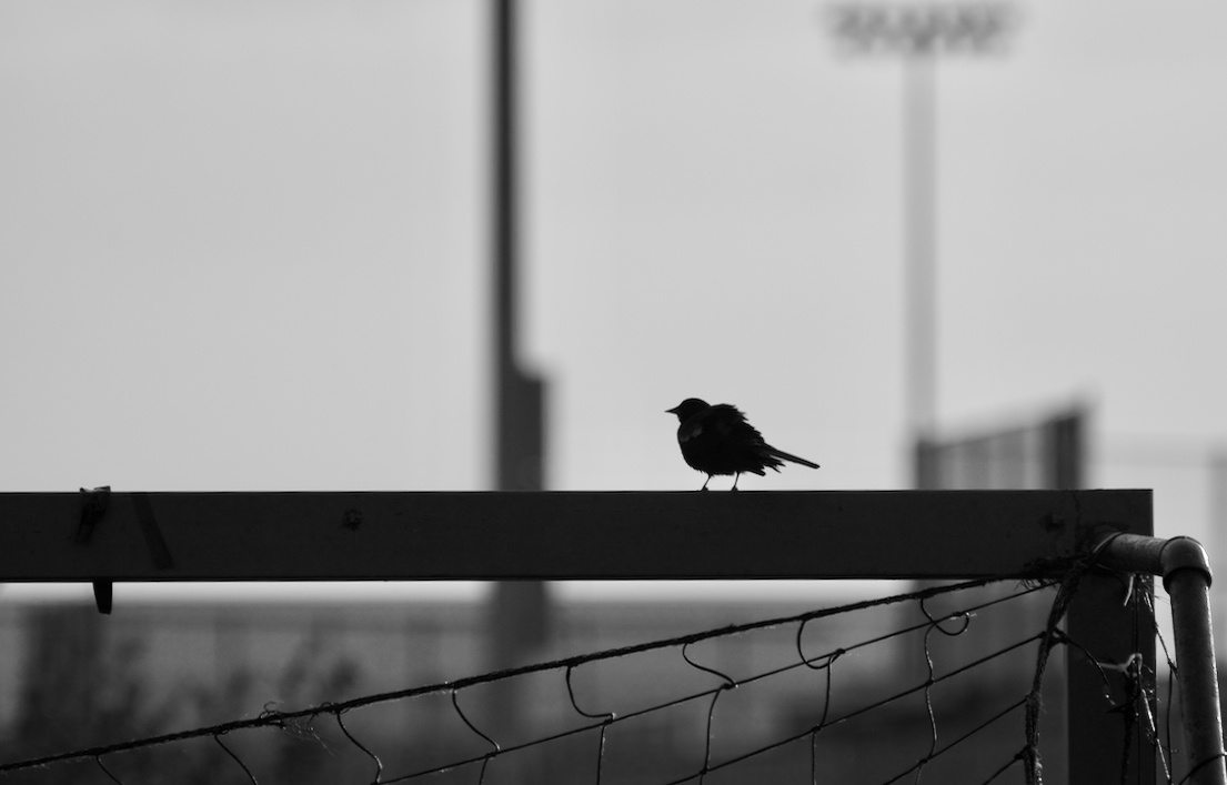 Blackbird. Sportscore Two. Loves Park, Illinois. June 2017. © William D. Walker