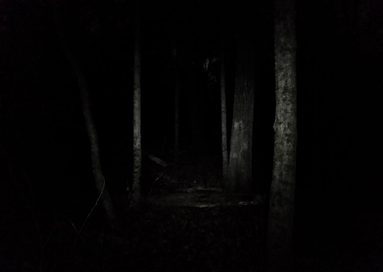 Deer at Night. UW Arboretum. Madison, Wisconsin. November 2017. © William D. Walker