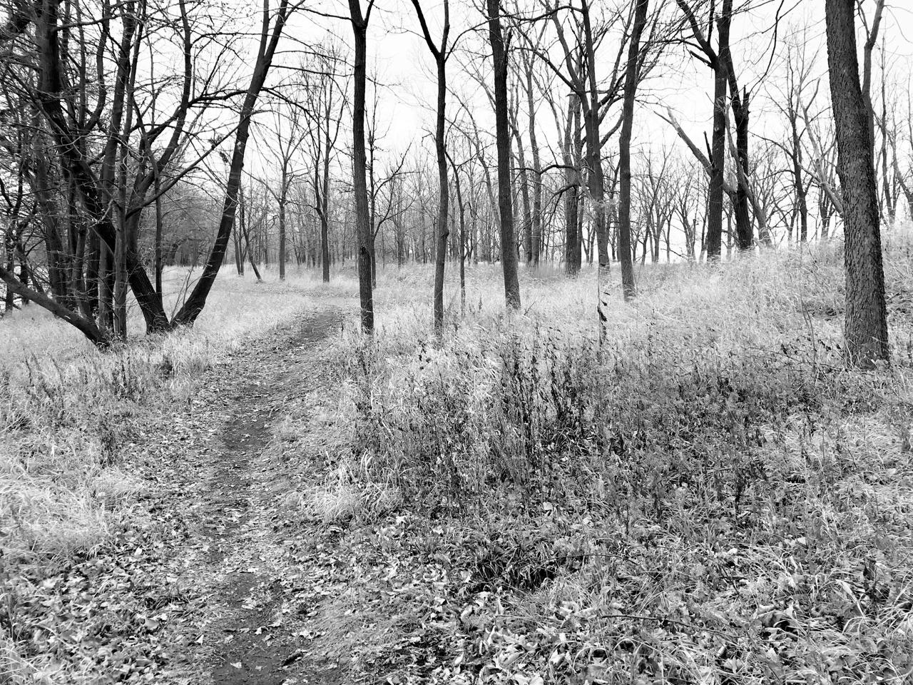 Fall Grass. Lake Farm Park. Madison, Wisconsin. December 2017. © William D. Walker