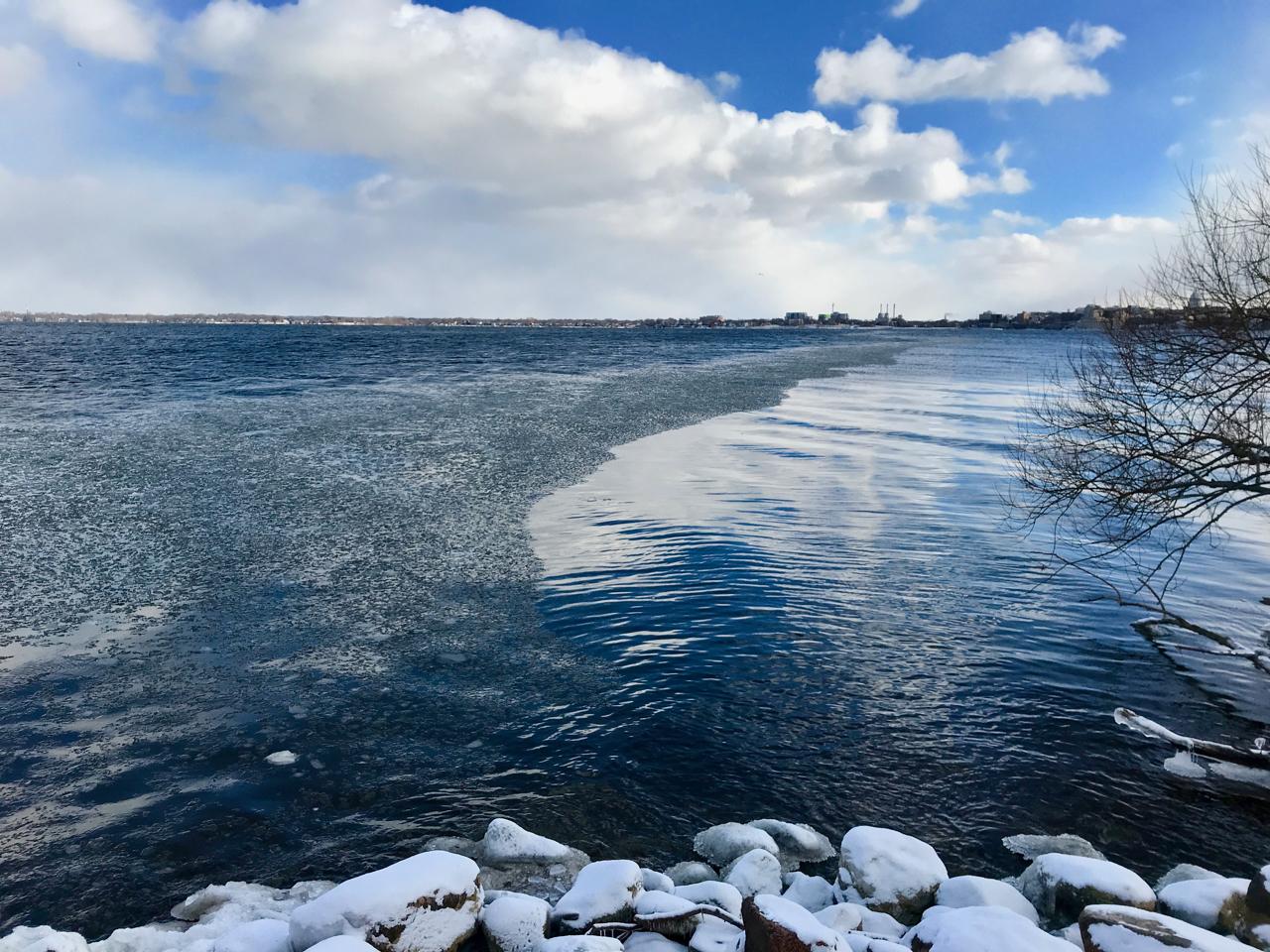 Windbreak. Picnic Point. Madison, Wisconsin. December 2017. © William D. Walker