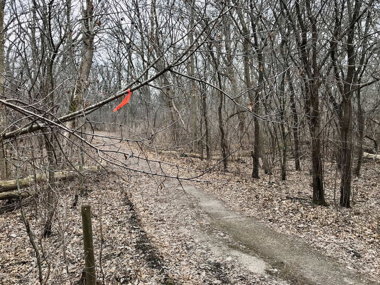 Marked for Removal. UW Arboretum. Madison, Wisconsin. March 2018. © William D. Walker