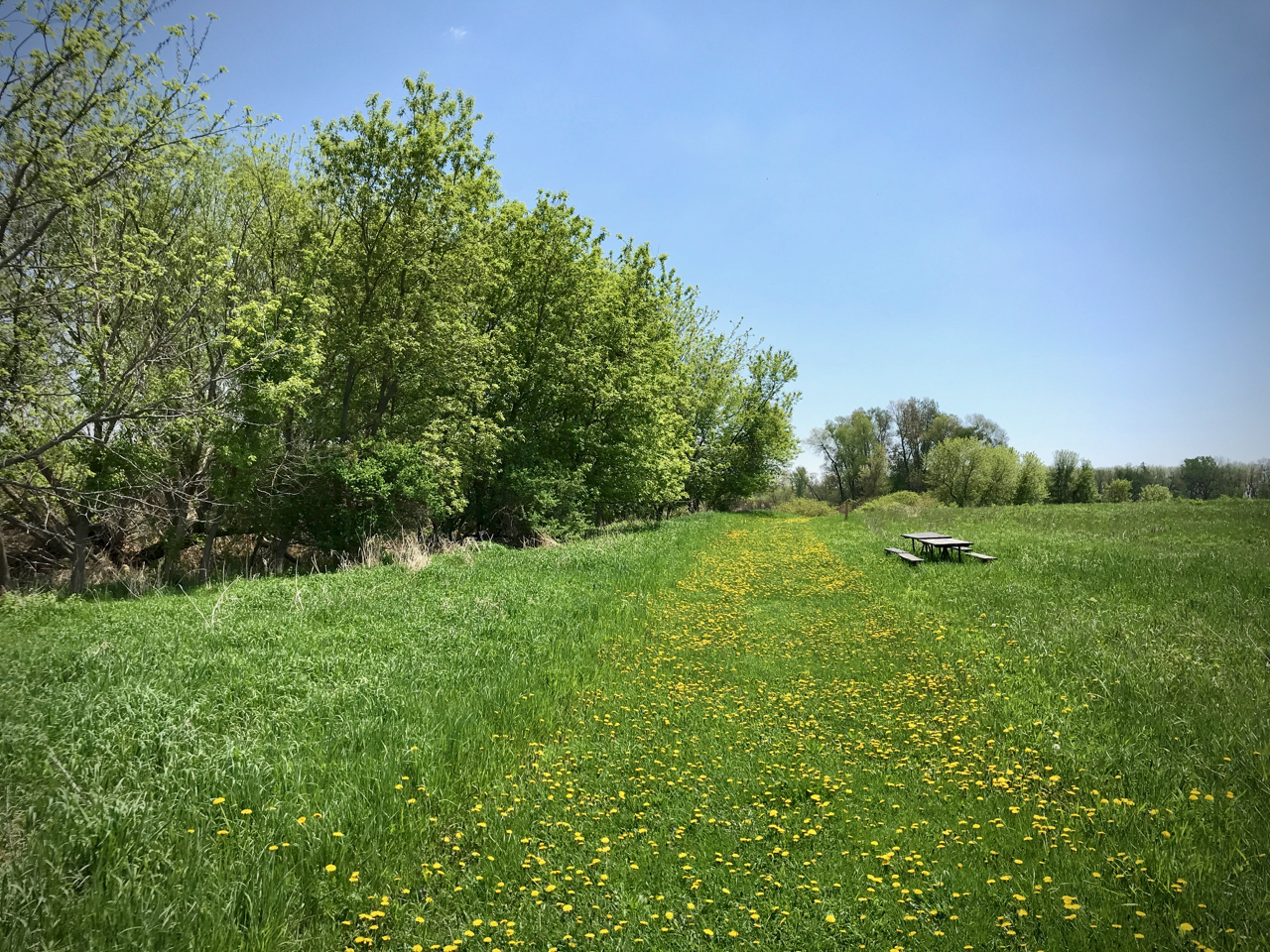 Dandelion Road. Lake Farm Park. Madison, Wisconsin. May 2018. © William D. Walker