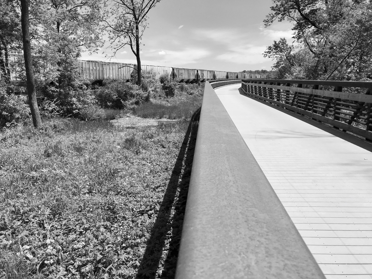 Rail. Lake Farm Park. Madison, Wisconsin. May 2018. © William D. Walker