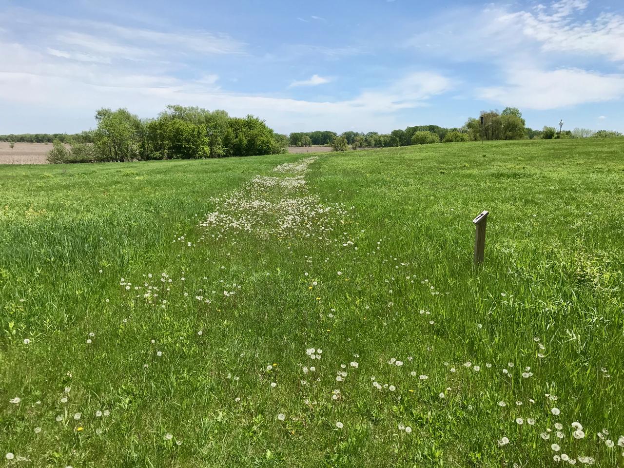 Dandelion Road Two. Lake Farm Park. Madison, Wisconsin. May 2018. © William D. Walker