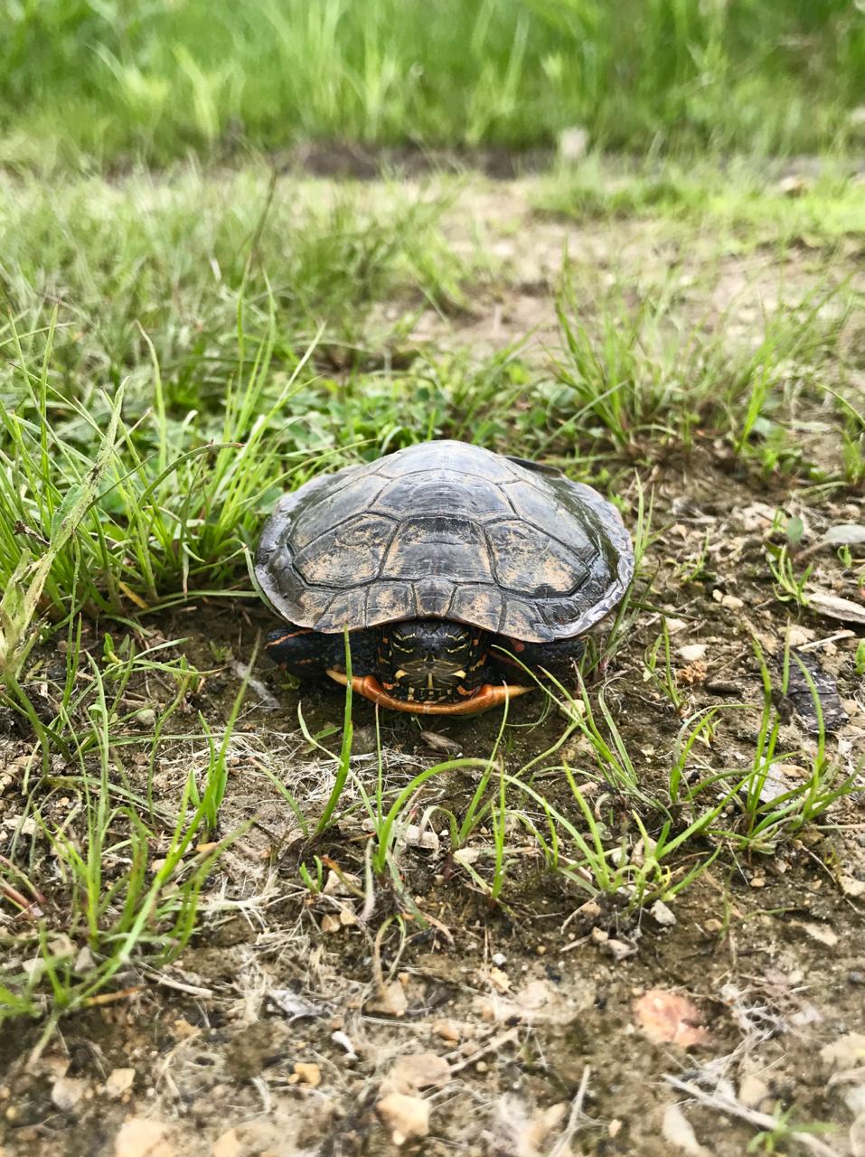 Shelled. UW Arboretum. Madison, Wisconsin. May 2018. © William D. Walker