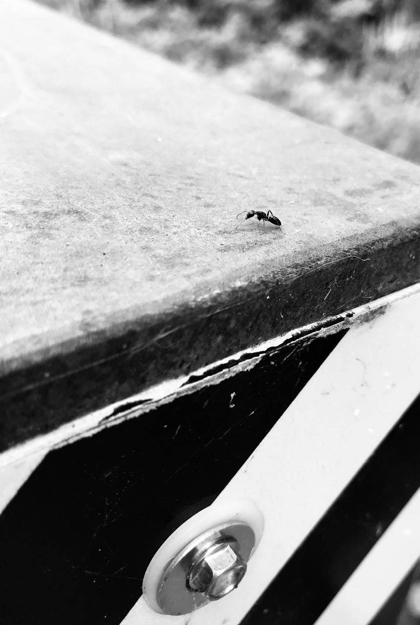 Ant. Lake Farm Park. Madison, Wisconsin. June 2018. © William D. Walker