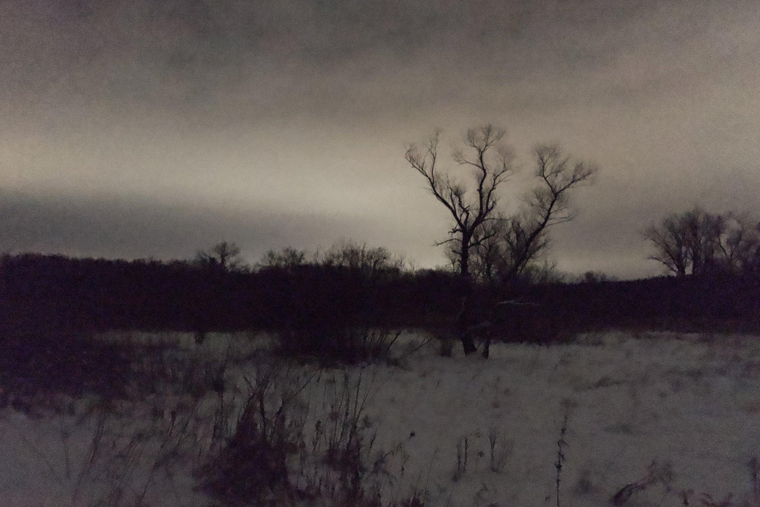 Bleakness. UW Arboretum.  Madison, Wisconsin.  January 2019.  ©William D. Walker
