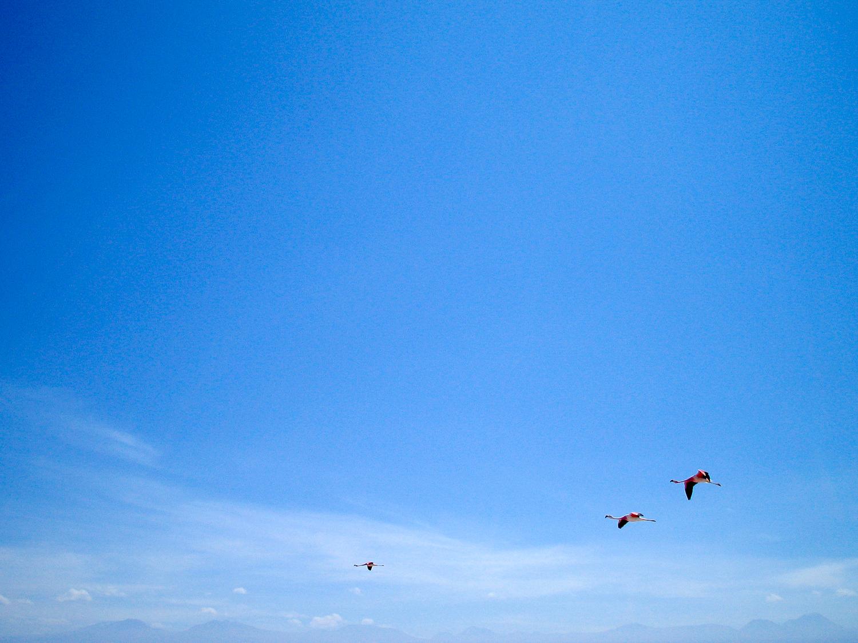 flamingoes in flight.jpg