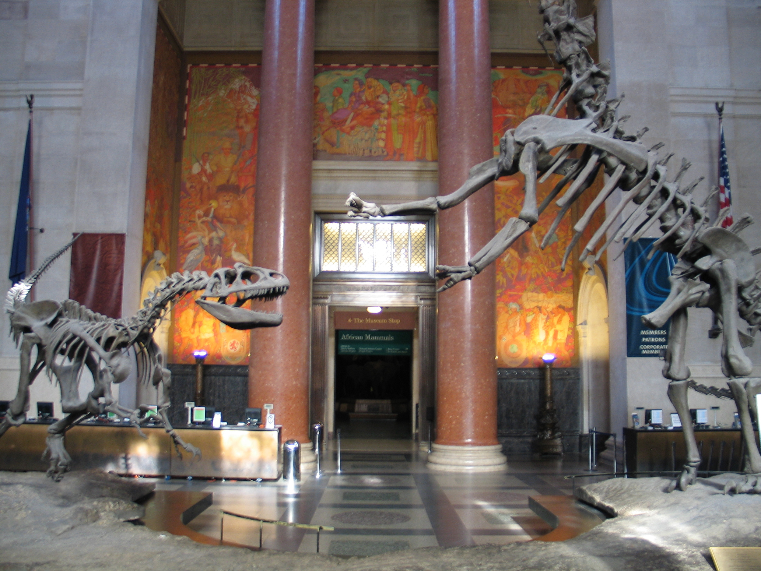 Dinosaur skeletons guard the lobby of New York City's American Museum of Natural History.