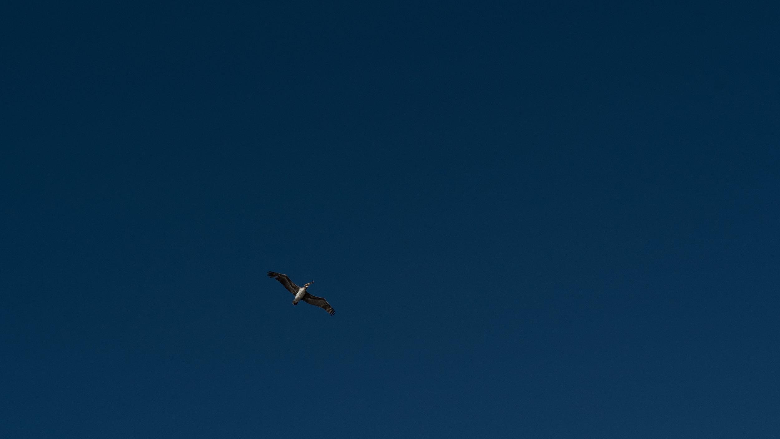 Pelican Blue (1 of 1).jpg