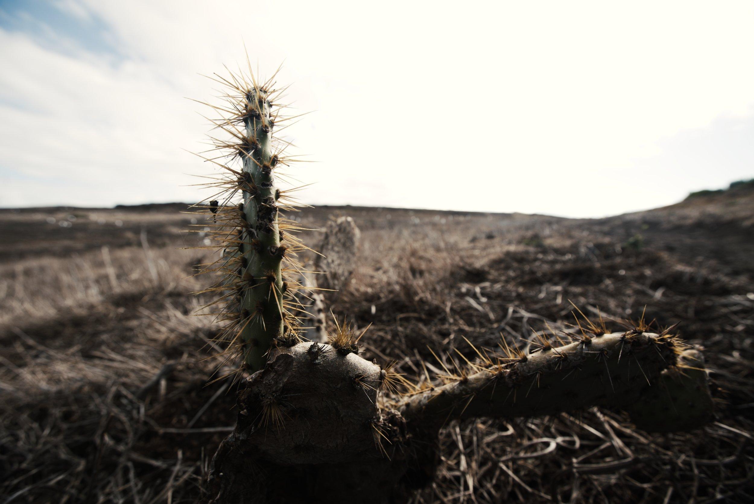 Cactus_1.20.1.jpg