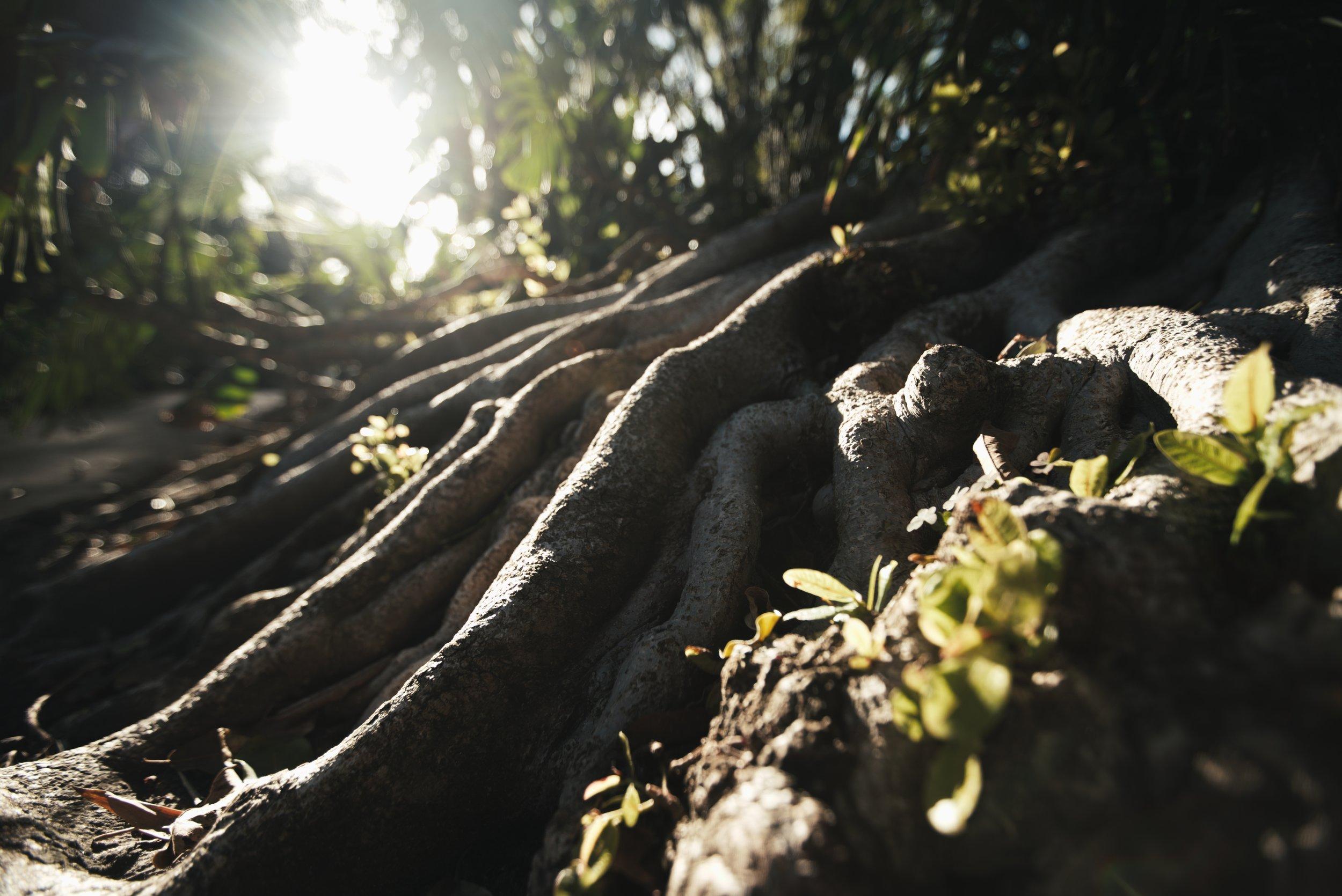 Roots 3_1.88.2.jpg